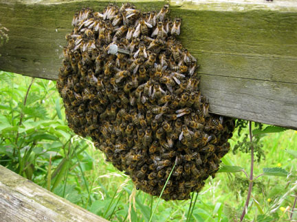 swarm-bees-fence